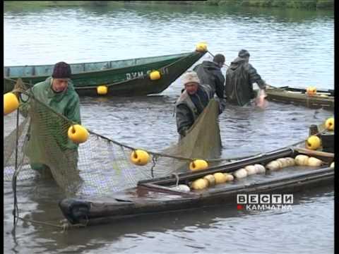 КАМЧАТКА, Лосось, рыбалка браконьеры, Сюжет ГТРК ВГТРК Вести-Камчатка