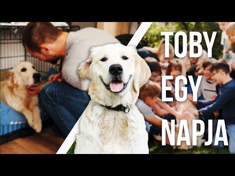 TOBY NARRÁLJA EGY NAPJÁT | Toby VLOG #23