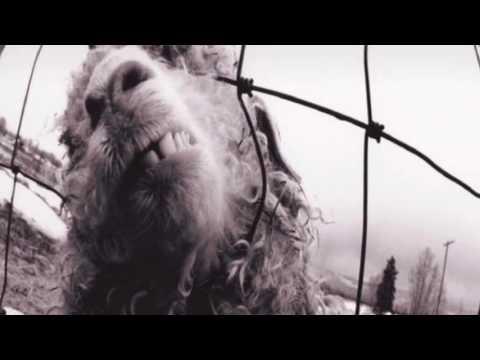 Pearl Jam - Daughter Lyrics