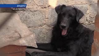 В Крыму зарегистрировали новые случаи бешенства