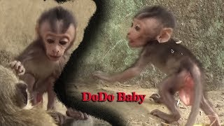 DoDo runs with a mother to find food, DoDo Skinny Very Lovely