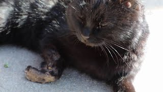 Cat Lost A Leg, But Gained Something Precious | Kritter Klub