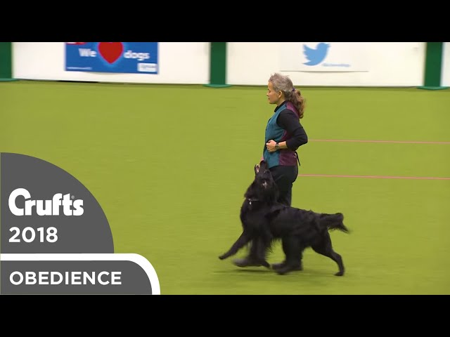 Obedience - Bitch Championship - Part 6 | Crufts 2018
