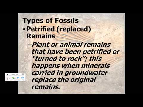 Fossil Types And Relative Dating Video Notes