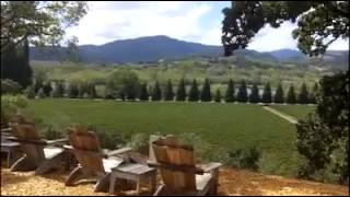 Copain Winery with Amicis Tours