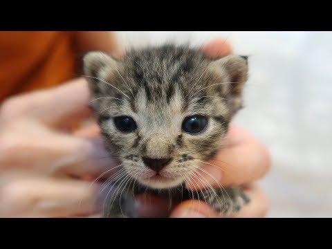 100% AWWdorable! - 3 NEW Foster Kittens