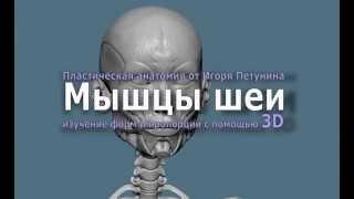 Лепка мышц шеи(Необходимый опыт в постижении художником особенностей реалистичной передачи характерных движений шеи..., 2014-09-20T08:50:01.000Z)