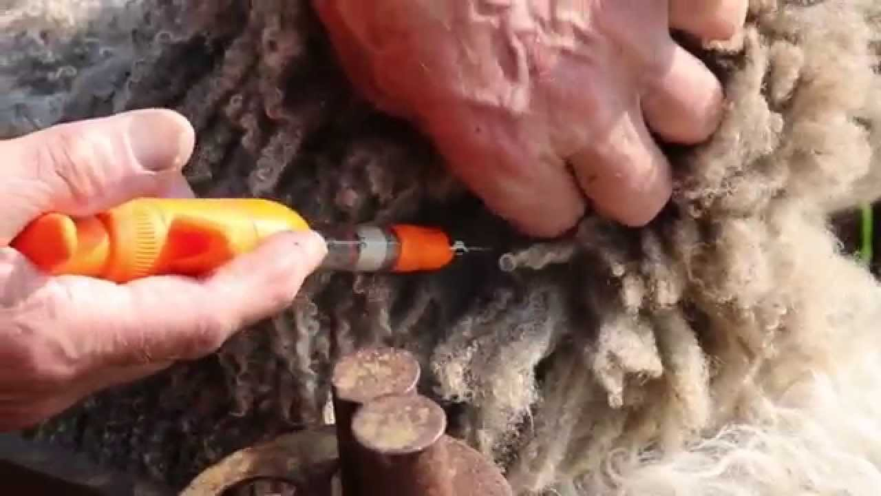 Sheep worming - correct injection technique