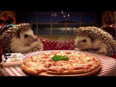Image result for hedgehog tv