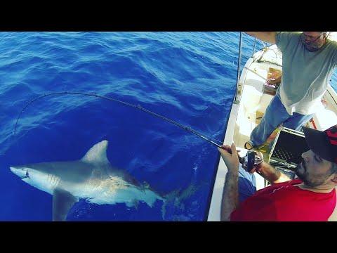 Mersin'de Oltaya Takılan Dev Köpek Balığı
