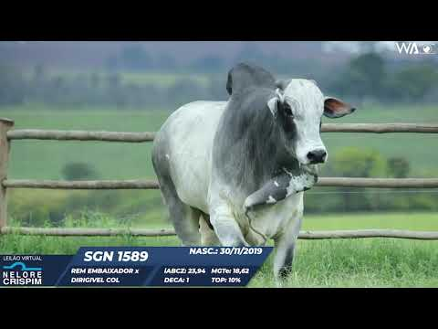 LOTE 13 SGN 1589