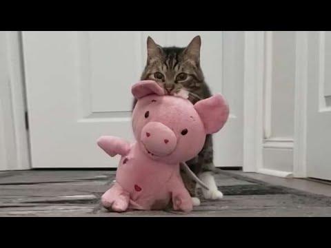 Любовь кота розовой свинки за 11 марта