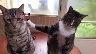 Кот с потрохами сдал своего товарища