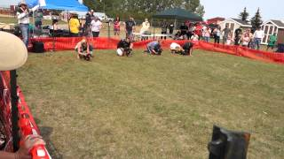 Dachshund Races At Strathmore Rodeo 2015