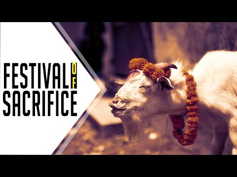 Festival of Sacrifice | Gudiyatham | Look Here