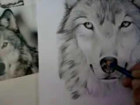 Como Desenhar De Um Lobo How To Draw A Wolf Youtube
