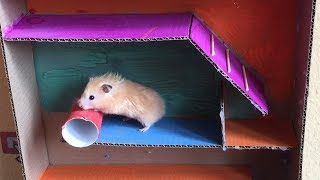 Cute Hamster  in BEANBAG colorful maze
