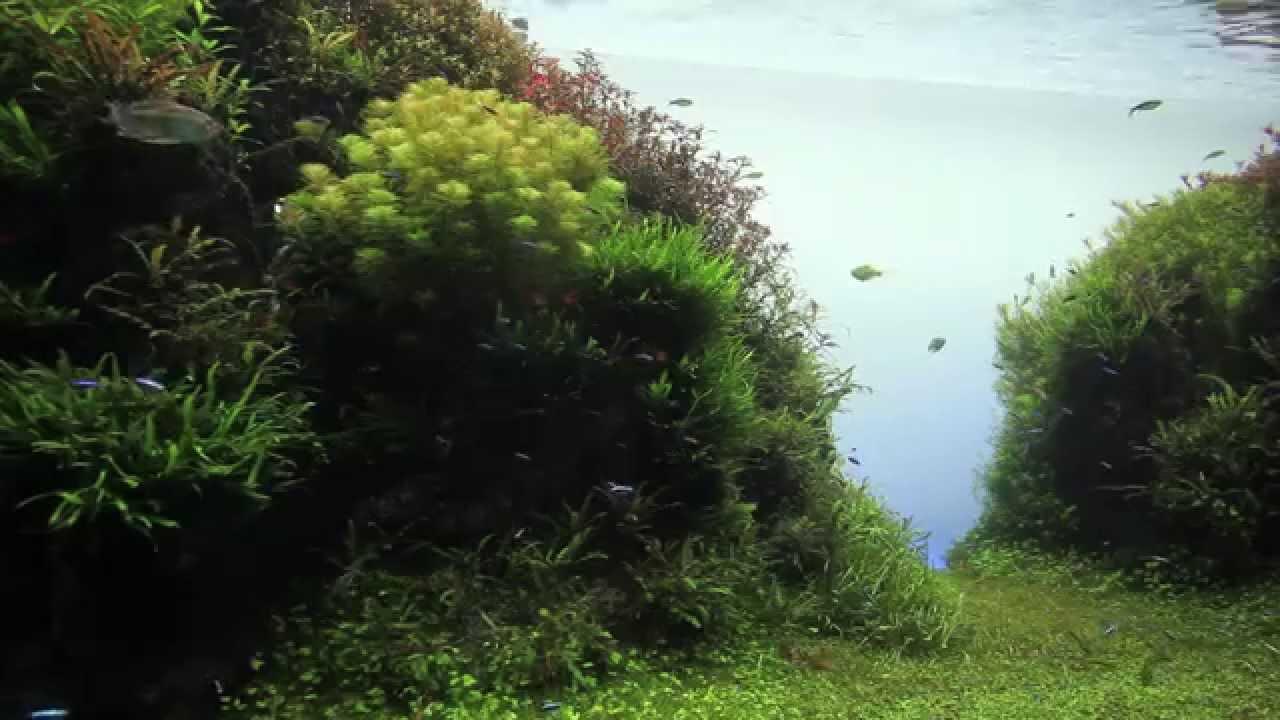 aquascape giant public aqua design amano live planted aquarium youtube. Black Bedroom Furniture Sets. Home Design Ideas