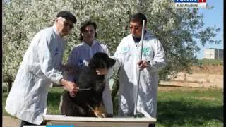 Калмыцкие селекционеры вывели новую породу собак