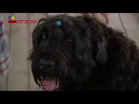 Ukrainian Summer Camp Uses Therapy Dogs to Help Kids With Disabilities