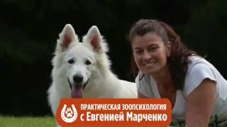Видео 1 Знакомство Практическая зоопсихология
