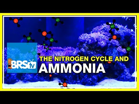 Week 13: Ammonia, not as simple as you think: the ideal tank cycle | 52 Weeks of Reefing #BRS160