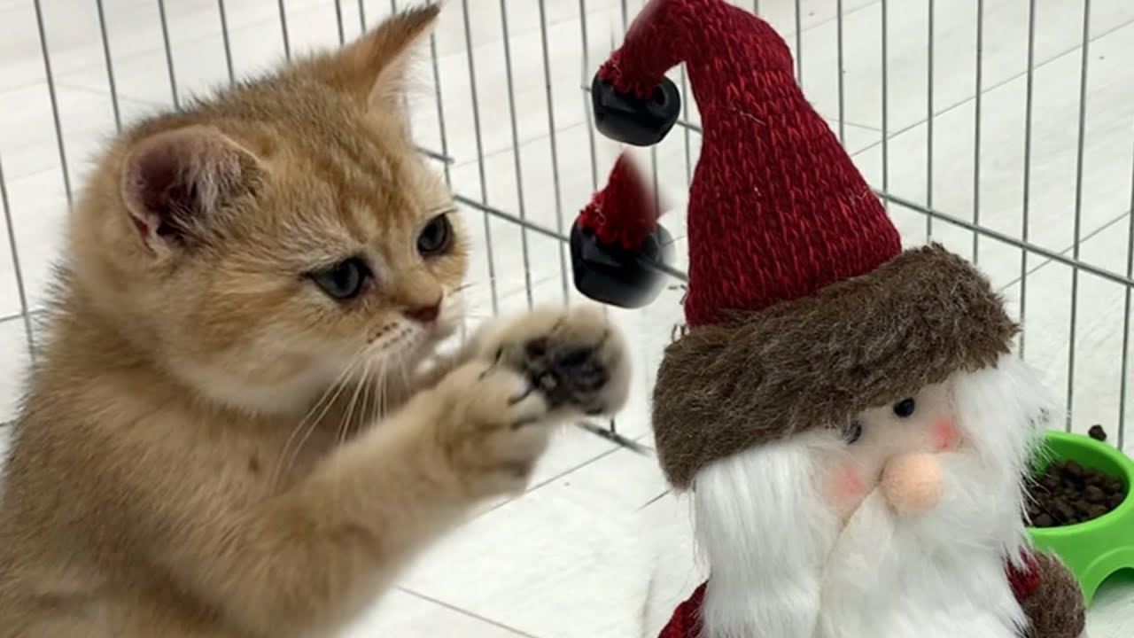 Kitten wants to steal Santa's bell. Willie and Kira's reaction to Christmas and New Year