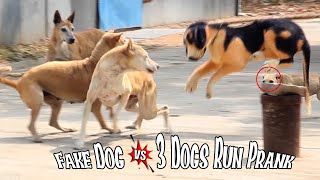 Fake Dog Bark Prank So Funny Can Not Stop Laugh Must Watch New Funny Prank Video 2021