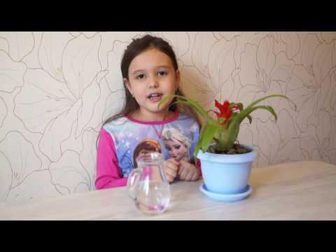Цветы гузмания Уход в домашних условиях за гузманией