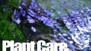 Nature Aquarium Maintenance - Plant Care