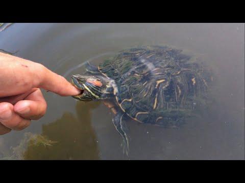 The Turtle Bit Me!