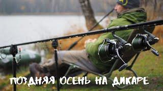 Ловля дикого карпа поздней осенью западная Беларусь ноябрь 2019