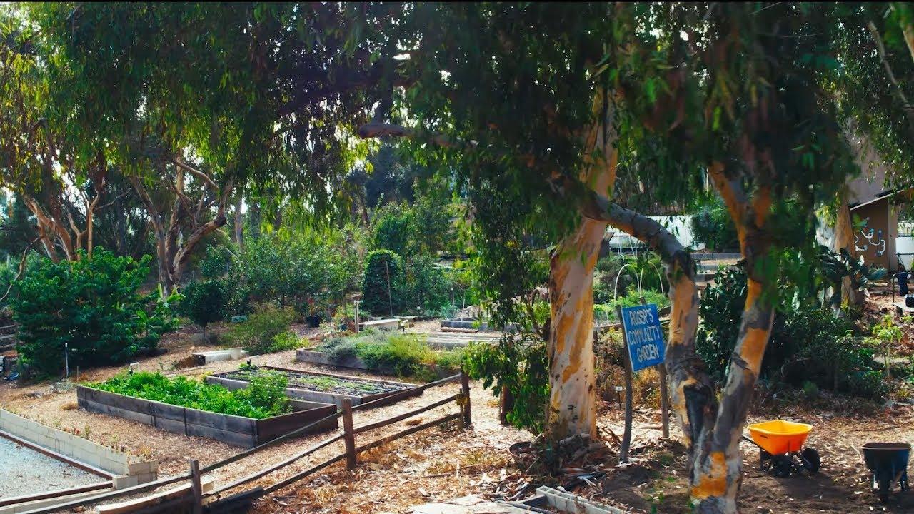 Roger S Urban Farmlab