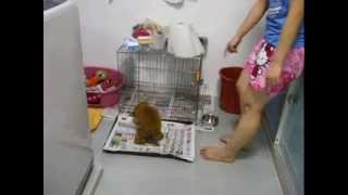 DingDing learn how to pee and poo on the tray rather then in the cage!