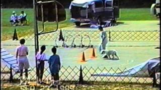 Danville Kennel Club Akc Agility Sept 23, 1989