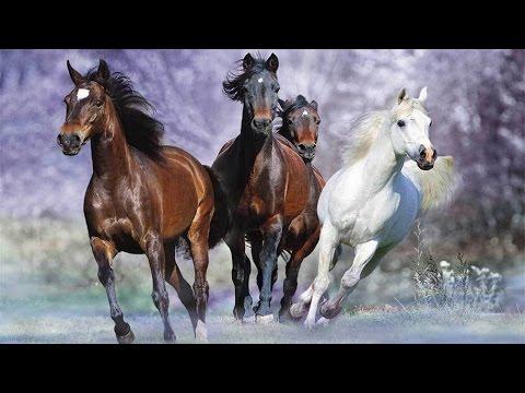 spirit-animal-message-full-moon-december-14-to-december-29,-2016---rebekah-campbell