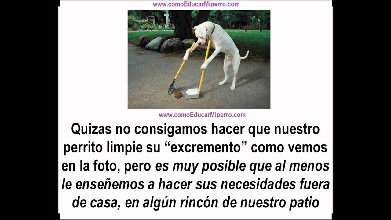 Bano Para Perros En Seco