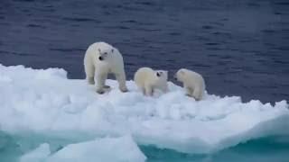 Арктика Земля  Франца  Иосифа www.туризм-сибири.рф Arctic Franz Josef Land www.туризм-сибири.рф