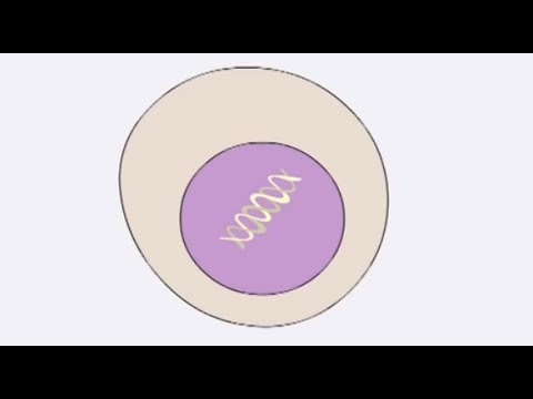 How cancer starts - Cancer Research UK