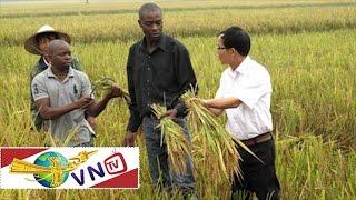 Nông dân Việt dạy trồng lúa ở châu Phi |  VTC