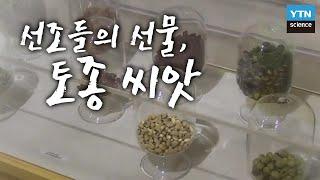 선조들이 물려준 선물, 토종씨앗 / YTN 사이언스