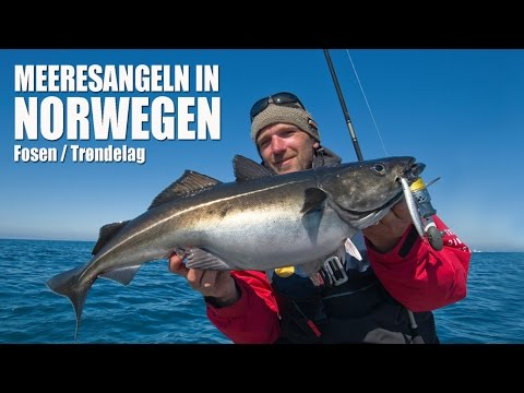 Angeln in Norwegen – Trøndelag / Mittelnorwegen