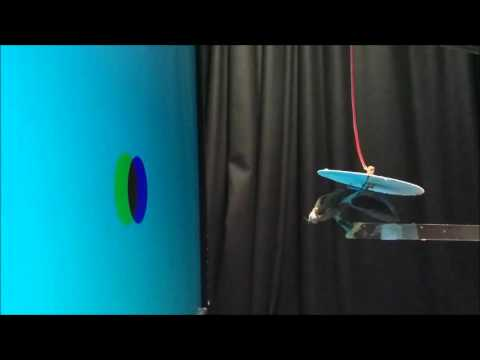 Insect stereopsis demonstrated using a 3D insect cinema