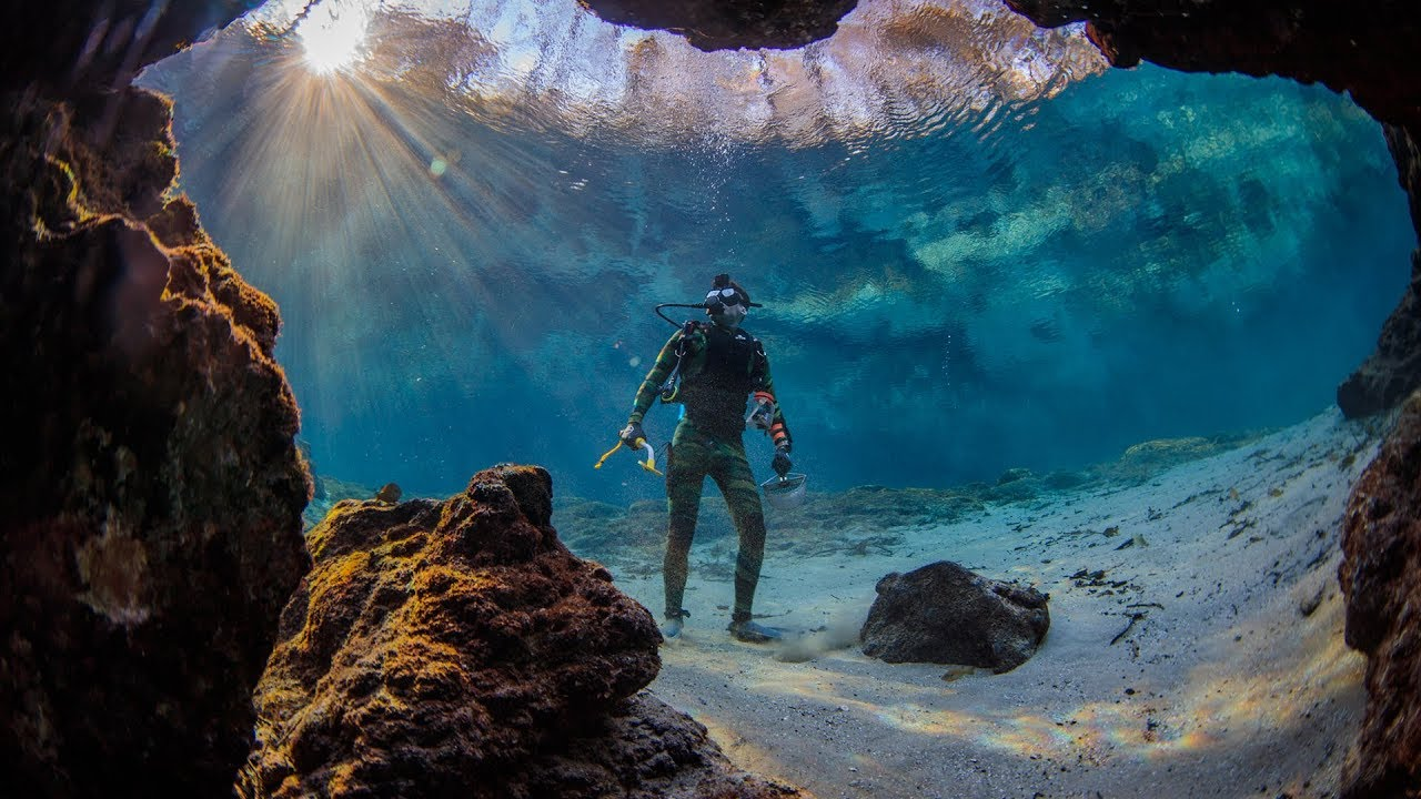 found-crystal-clear-swimming-spot-in-florida-beware-alligators