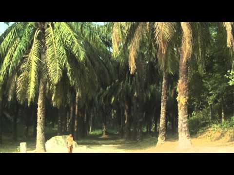 The Catastrophe Crop: Palm-Oil