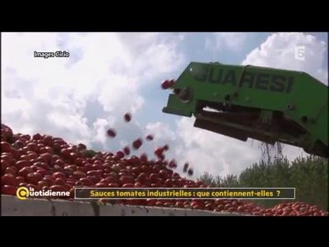Sauces tomates industrielles : que contiennent-elles ? - La Quotidienne