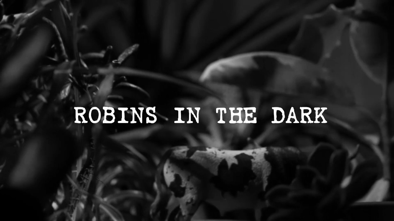 Download COPY007 - Breger - Robins In The Dark (Video Cut)