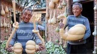 Trung Quốc: Lão nông trồng được… bí ngô thiên nga
