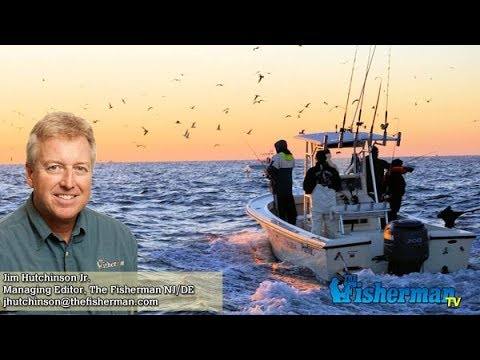 October 26 2017 new jersey delaware bay fishing report for Barnegat bay fishing report