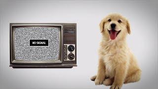 Что видят СОБАКИ, когда смотрят телевизор?  [Plushkin]